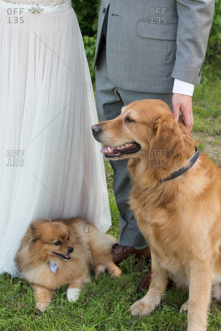 Dogs sitting next to bride and groom