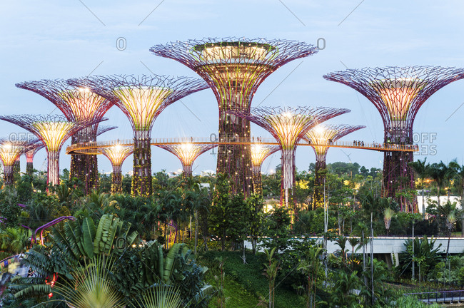 Singapore - July 18, 2012: Supertree Grove in Gardens by the Bay at dusk