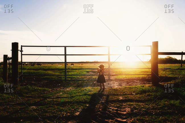 Rearview of little girl looking through gate at field of cows at sunset