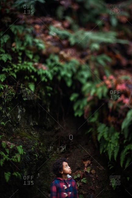 Portrait of young African American girl in dark woods