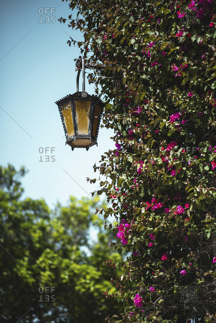 Blooming shrub with ornate vintage lamp