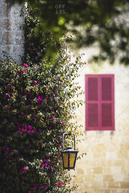 Rustic lampshade hanging in blossoming flower bush