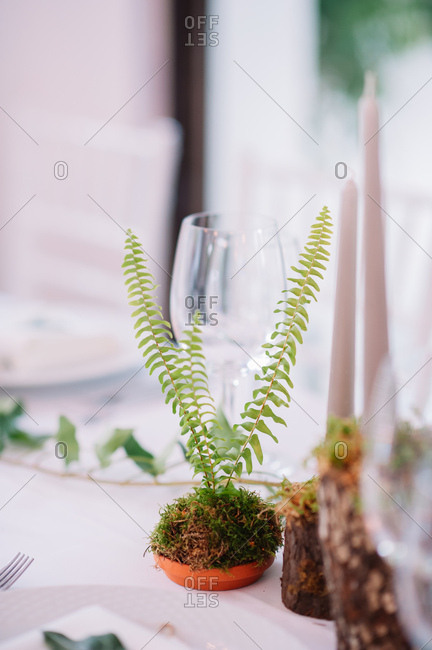 Rustic fern centerpieces on set table at a wedding reception