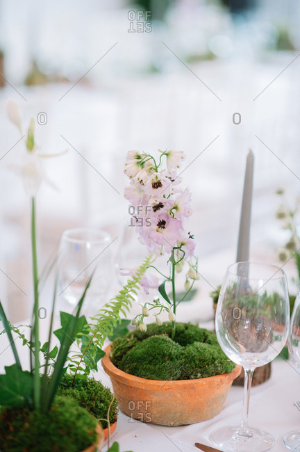Flower and moss centerpieces on set table at a wedding reception