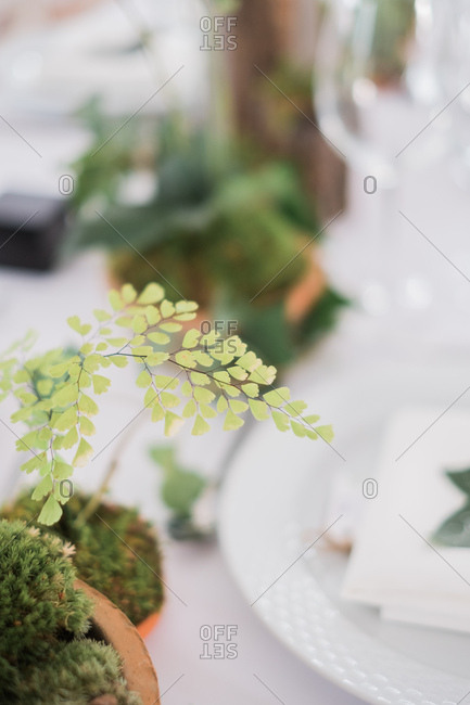 Natural decor on set table at a wedding reception