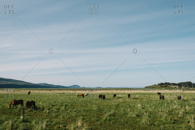 Horses grazing in rural Alaska