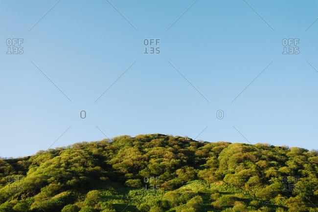 Dense forest under blue sky