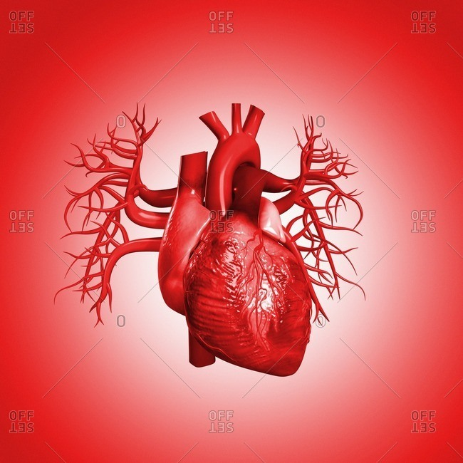 Human heart against red background, illustration