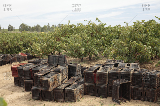 Crates for wine production near the Olifants River irrigation system, near Klawer, Western Cape, South Africa