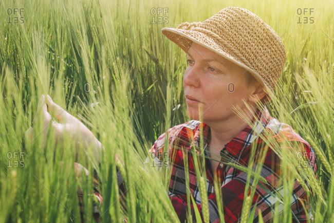 Female farmer examining barley crop