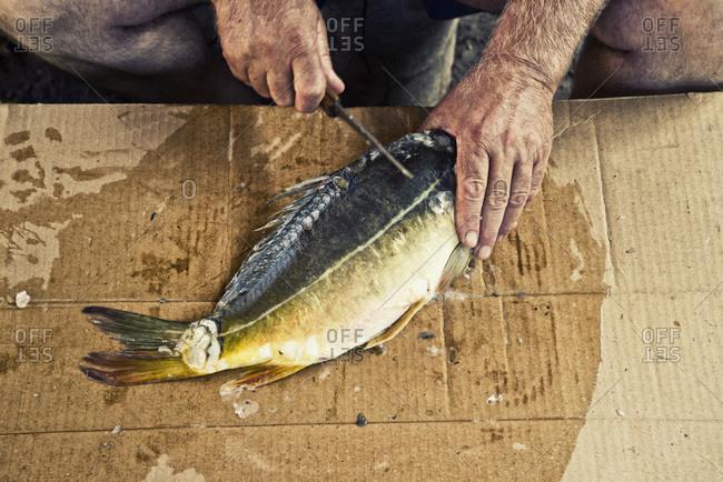 Preparing carp