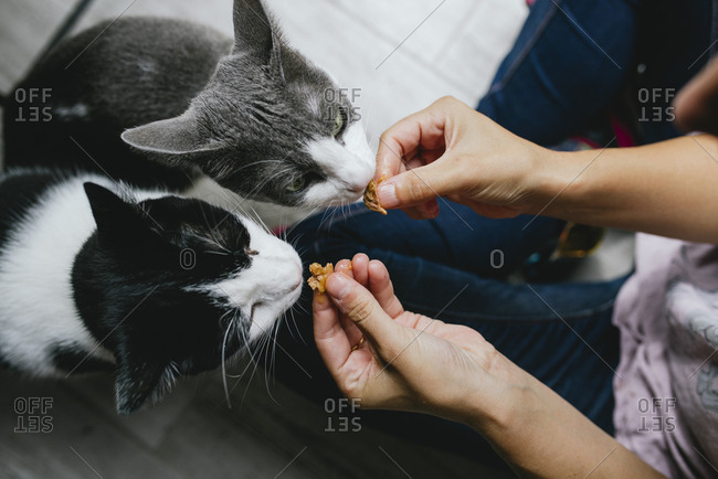 Woman feeding two cats at home