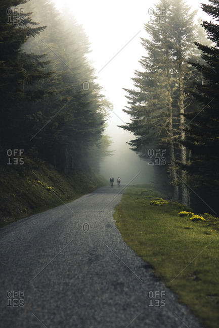 Scenic one-lane road through a forest on a foggy day with cyclists in the background