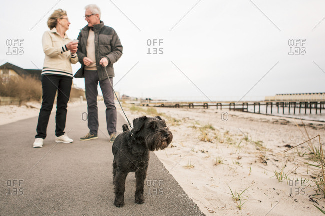 Schnauzer against Senior couple standing on footpath at beach