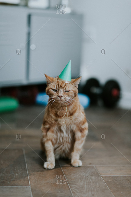 Disgruntled Cat With Birthday Hat Sitting In Middle Of Room Stock Photo