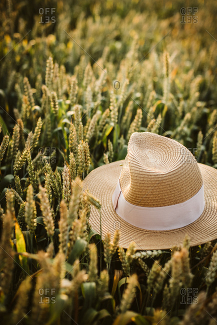 Hat resting on rye in a rural field