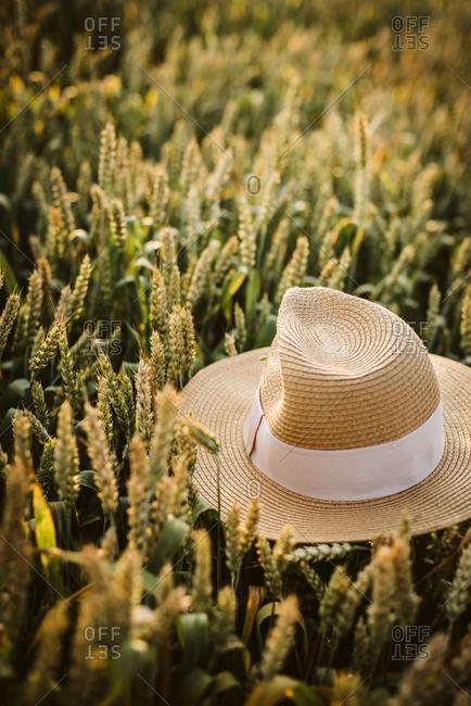 Hat resting on rye in a rural field