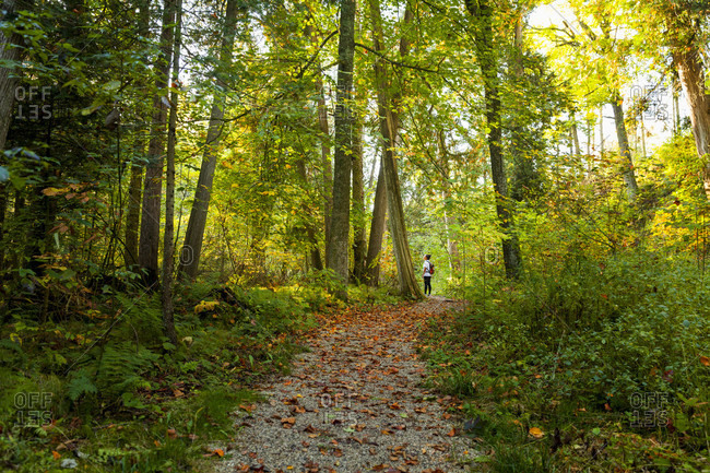 Hiker standing in lush forest, Maribel, Wisconsin, USA