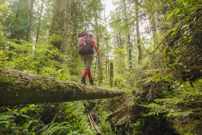 Backpacker hiking along fallen tree in forest, West Coast Trail, British Columbia, Canada