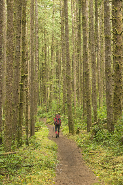 Backpacker walking through forest while hiking along West Coast Trail, British Columbia, Canada