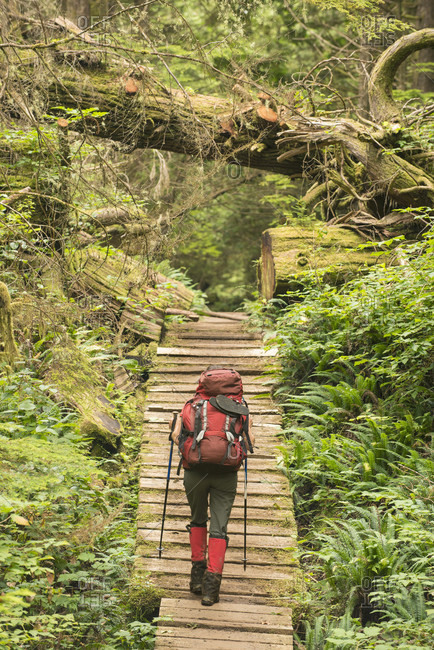 Backpacker walking along boardwalk through forest while hiking along West Coast Trail, British Columbia, Canada