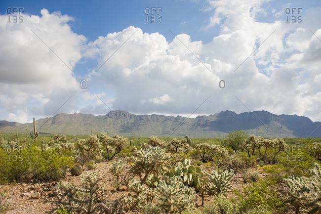 Desert landscape filled with cacti