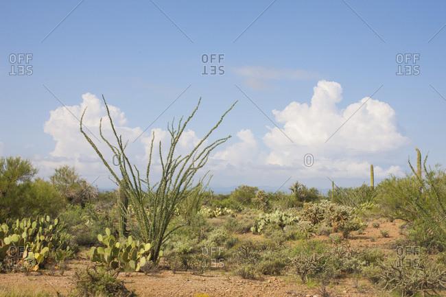 Desert landscape with cacti - Offset