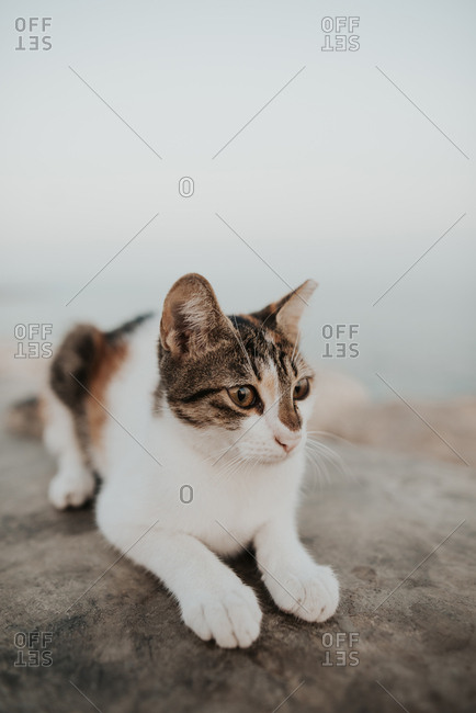Brown and white cat