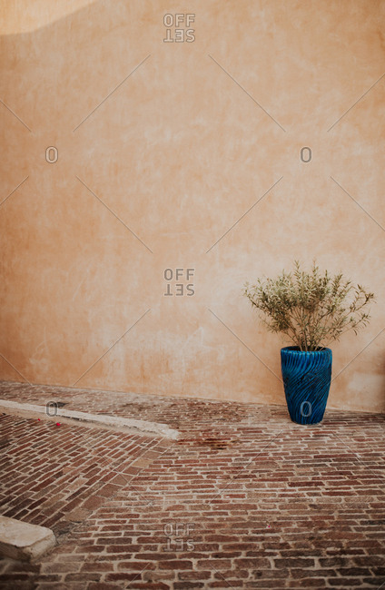 Plant in a blue pot on brick patio