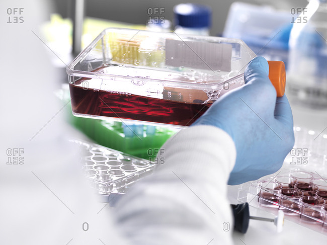 Close-up of laboratory technician holding blood sample in container for medical testing