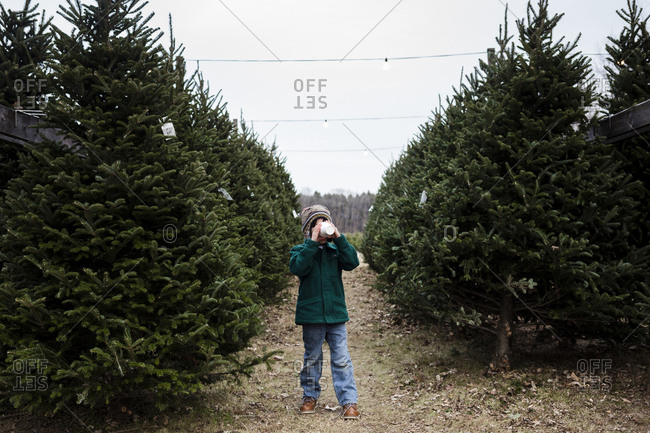 Full length of boy having drink while standing between Christmas Trees at farm