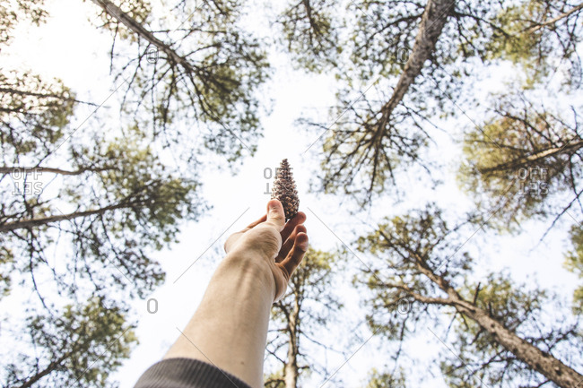 Low angle view of cropped hand holding pine cone against trees at forest