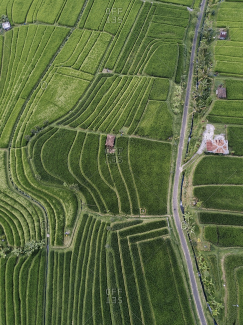 High angle view of cultivated land in village