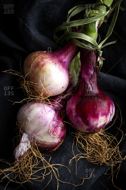 Close-up of fresh onions on black textile