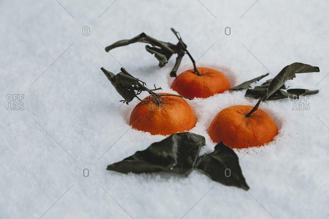 Close-up of fresh oranges fallen on snow