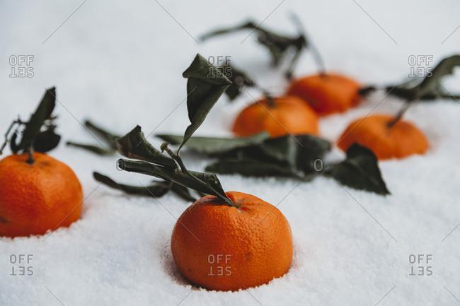 Close-up of oranges fallen on snow