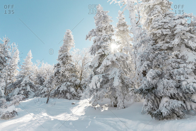Snow covered trees at forest against sky during winter