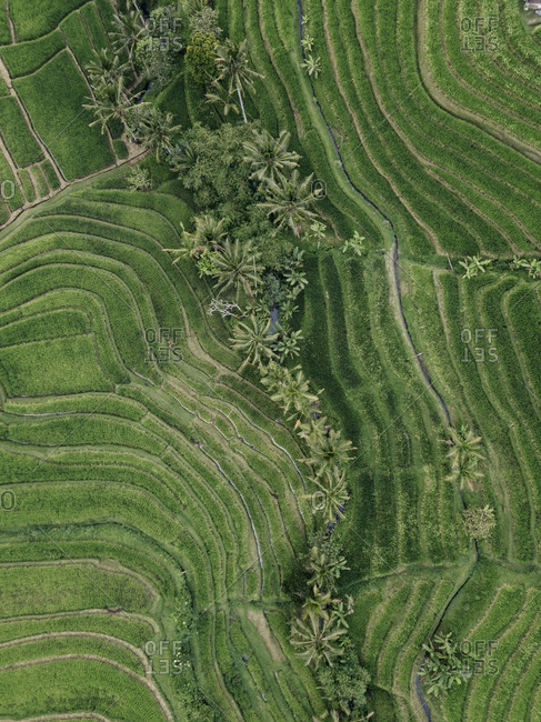 Overhead view of patterned agricultural field in village