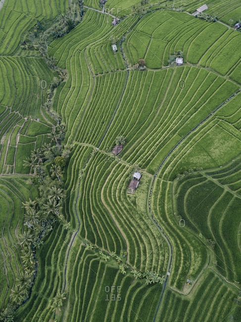 High angle view of patterned agricultural field in village