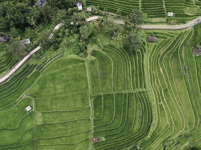 High angle view of terraced field in village