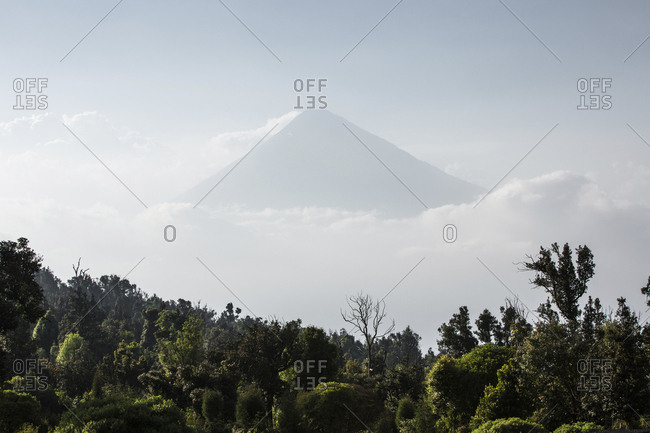 Scenic view of forest against mountain and cloudy sky