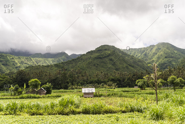 Bali, Indonesia - January 27, 2013: Isolated wooden hut standing in rice paddies with mountain in background