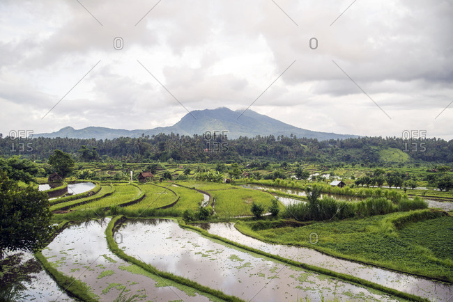 Looking out over terraced rice fields towards Mount Agung in Bali, Indonesia