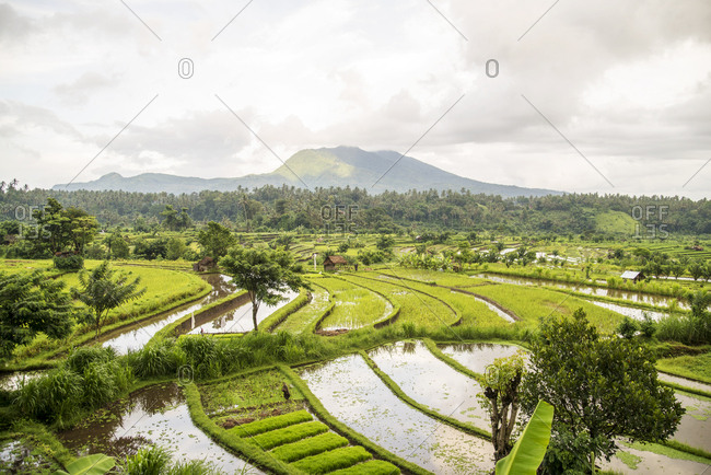 Panoramic view over rice fields towards Mount Agung in the distance in Bali, Indonesia