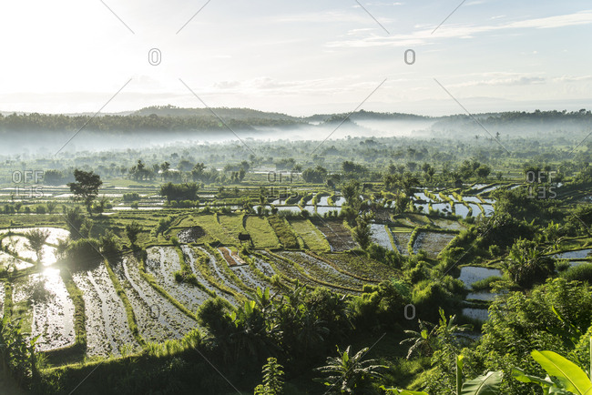 Early morning mist sitting in valley of terraced rice fields in Bali, Indonesia