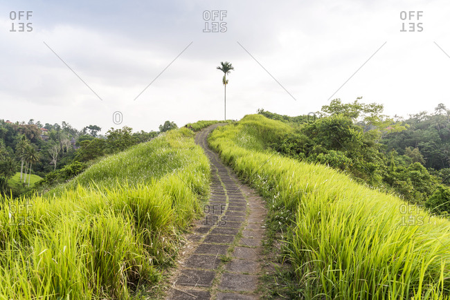 Empty paved path through long grass climbing to top of hill