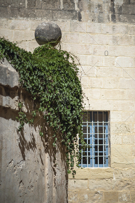 Corner of garden wall with thick ivy