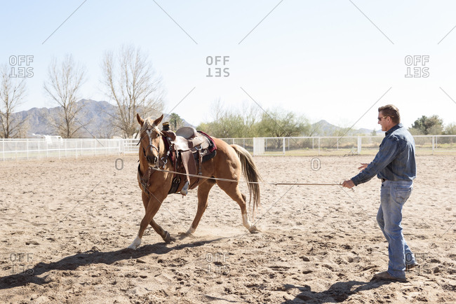 Man lunging horse