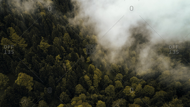 Drone view of misty clouds hanging over lush forest in France