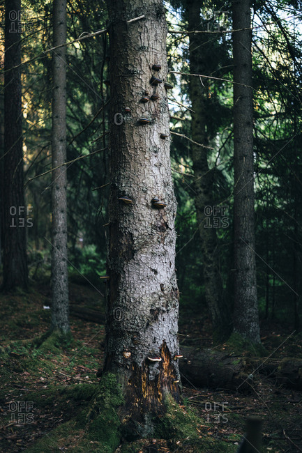 Tree in a forest with animal markings